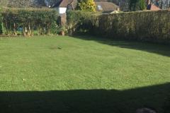 hedge cutting wimborne
